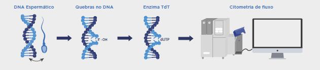 FRAGMENTAÇÃO DO DNA ESPERMÁTICO - LÂMINA